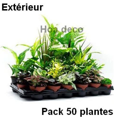 lot de 50 plantes pour mur v 233 g 233 tal ext 233 rieur