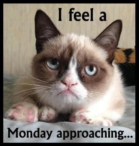Tard The Cat Meme - tard the grumpy cat hahaha pinterest