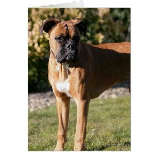 boxer colors fawn why is a boxer called sealed brindle quora