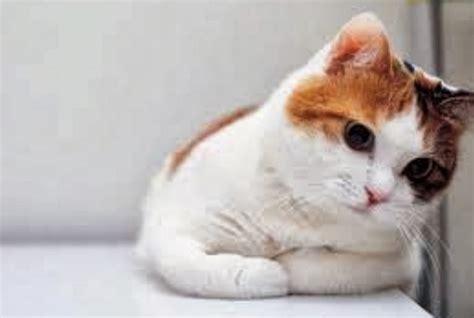wallpaper bergerak kucing 18 wallpaper kucing lucu terbaru bangiz