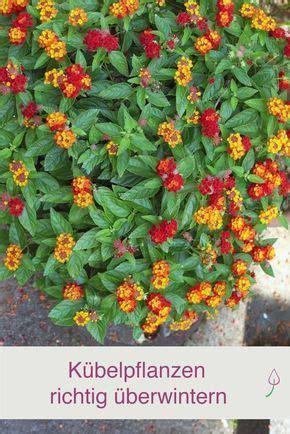 Garten Pflanzen Nicht Winterhart by K 252 Belpflanzen Richtig 252 Berwintern Garten