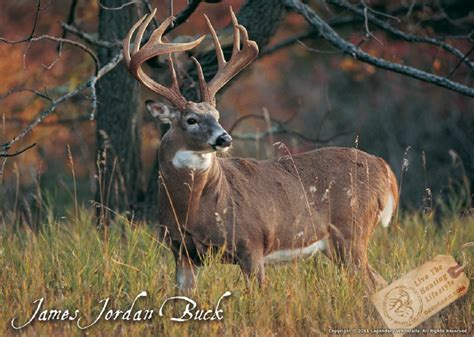 what the buck 100 years of the buck legendary whitetails