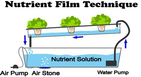 nutrient film technique nft hydroponics