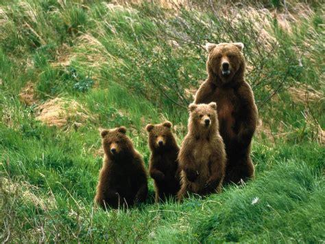 imagenes de la familia de animales 23 de las fotos familiares m 225 s adorables y tiernas del