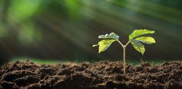 fertile ground what you need to about soil to keep