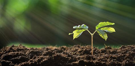 fertile ground what you need to know about soil to keep