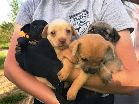 rescue missouri humane society rescues 55 dogs from hoarding situation