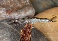 caithness flies sea trout