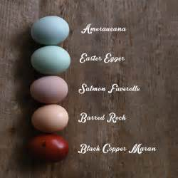 pink black what color what color does your chicken lay amercauna easter egger