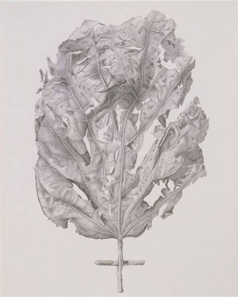 libro botanical drawing using graphite 51 best images about graphite botanical illustration on poppies leaf drawing and