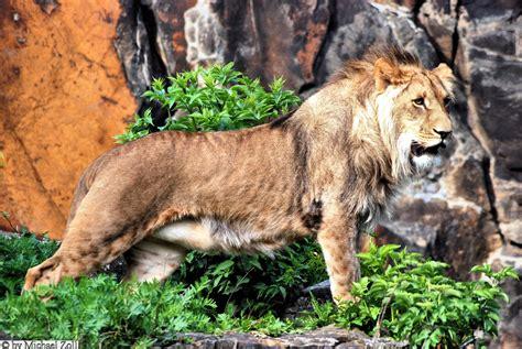 Zoologischer Garten öffnungszeiten by Zoo Berlin Spree Athen