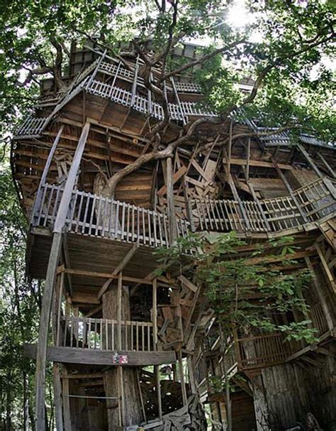world s biggest tree house worlds biggest house joy studio design gallery best design