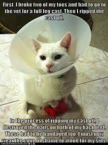 Cone Of Shame Meme - 75 best the cone of shame pet shaming images on pinterest