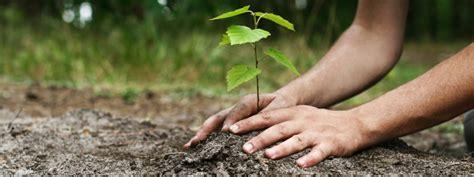 Arbre à Planter by Arbre Laval Plantation D Arbre 224 Laval Planter Un