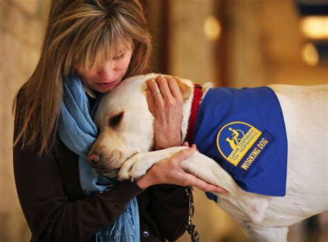 places that service dogs service comforts who are victims of abuse the columbian