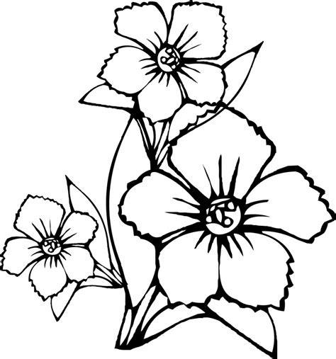 pictures of flowers to color flower coloring pages coloringsuite