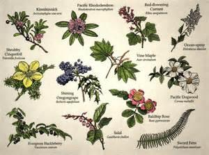 Garden Flower Identification Flowers