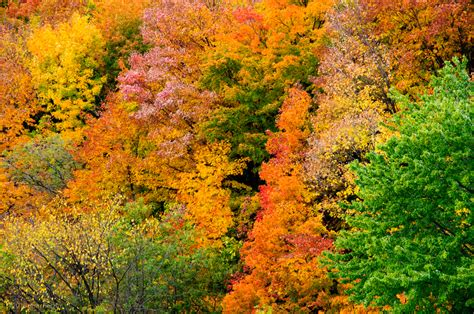 how to capture beautiful fall pictures and make the most