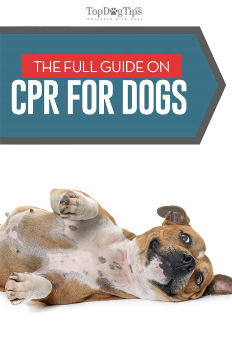 cpr on a how to do cpr on a the guide for beginners