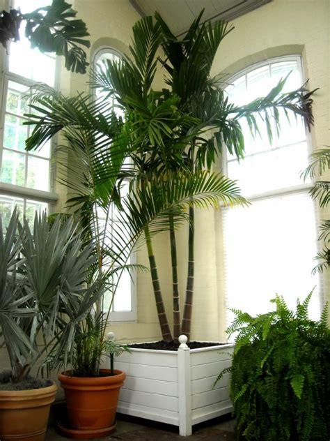 zimmerpflanzen schön dekorieren palmen f 252 rs wohnzimmer zimmerpalmen bilder welche sind
