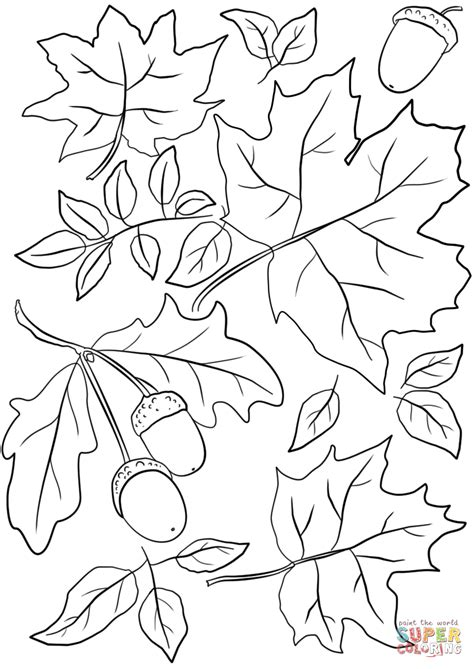 autumn leaves and acorns coloring page free printable