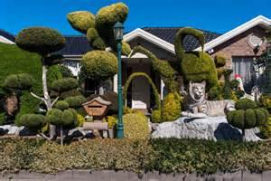 westography sunshine front yard topiary abc news