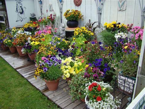 pretty container gardens   perfect   home