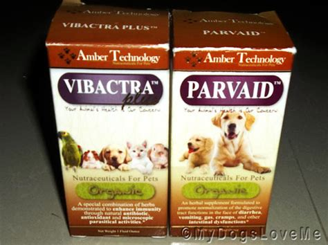 home remedies for parvo in dogs treating parvo at home 28 images vaccination is key to canine parvovirus