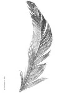 25 unique feather sketch ideas on pinterest feather
