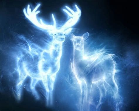 expecto patronum test expecto patronum what is your patronus harry potter amino