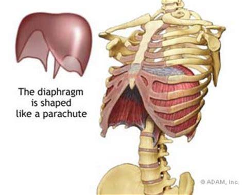 anatomy  breathing