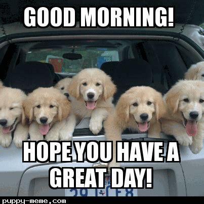 adorable  cute good morning memes sayingimagescom