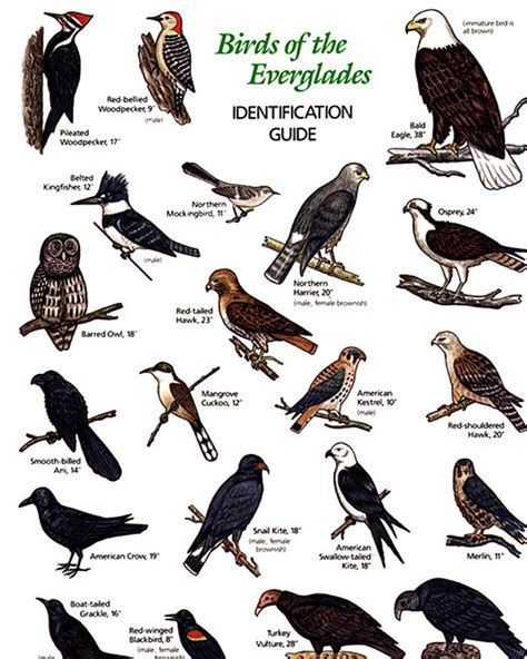 different types of birds species car pictures different