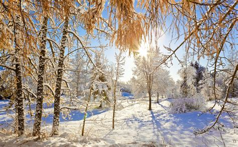 beautiful sunny winter day nature revives