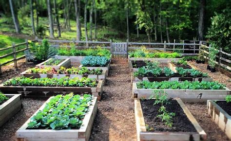 Hochbeet Standort by Hochbeet Selber Bauen Und Bepflanzen Vorteile