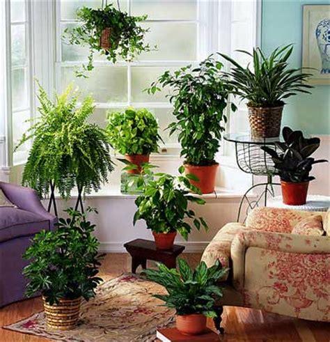 favorite  indoor plants lush  blush