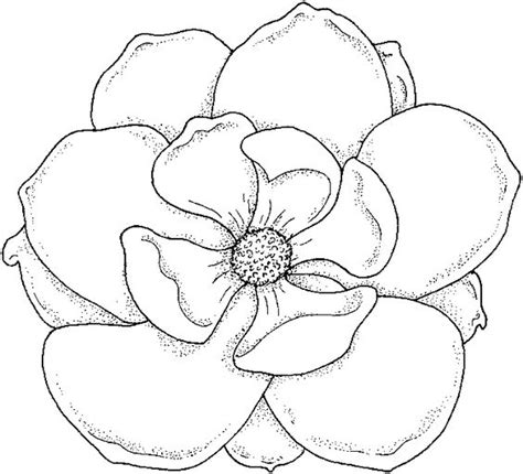 printable magnolia flowers image gallery magnolia outline