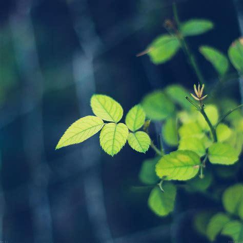 wallpaper blue leaves mc01 wallpaper greenish flower blue leaf papers co