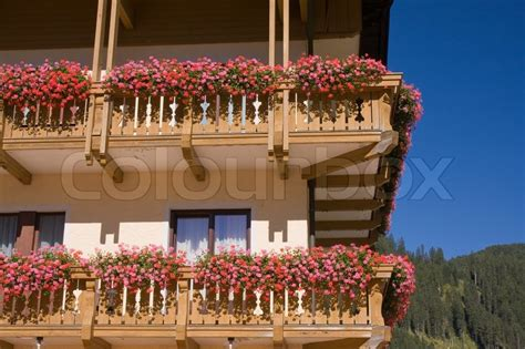 traditional alpine house stock photo image of blooming typical alpine house with geranium in bloom stock photo