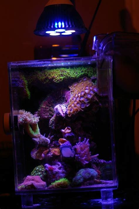 pico reef led lighting 17 images about reef tank inspiration on pinterest
