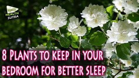 how to be better in bed for your man eight plants to keep in your bedroom for better sleep