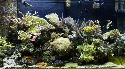 types of aquariums types of saltwater tanks saltwater aquarium maintenence