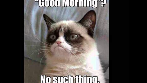 cat meme grumpy cat meme