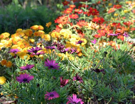fall blooming flowers 6 fall blooming flowers houz buzz