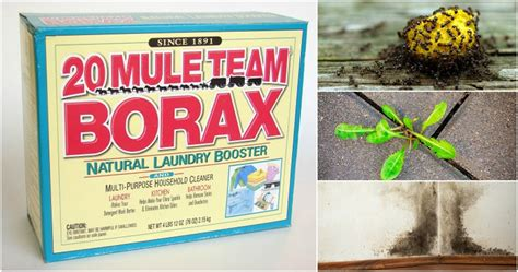 sales de borax 15 ways to use borax you ve probably never even thought of
