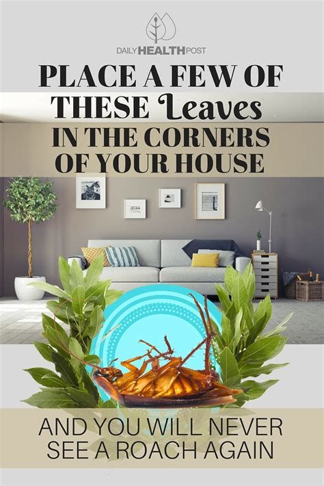how to prevent cockroaches in bedroom place a few of these leaves in the corners of your house