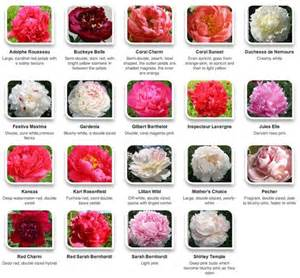 peony color peonies by color via hyperactive farms flower
