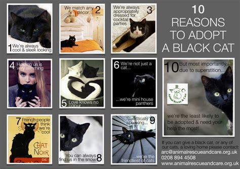 Top 10 Reasons To Adopt A by Poem Contest Black Cat Awareness All Poetry
