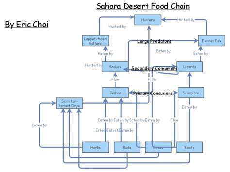 food web generator free food chain insight maker