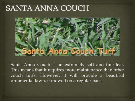santa anna couch award turf supplies premium quality couch grass supplier